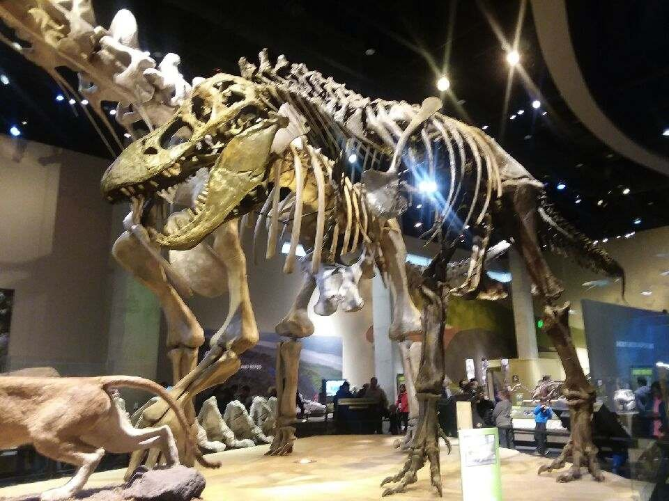 Perot-Museum-of-Nature-and-Science